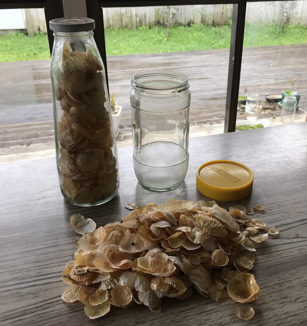 Nana's jars of shells
